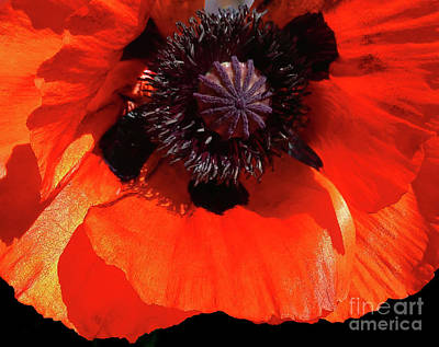 Digital Art - Poppy Macro by Jasna Dragun