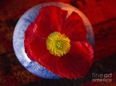 Photograph - Poppy On Orange by Jeanette French