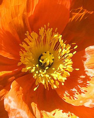 Op Art Photograph - Poppy Opart Triplet C by Dick Jones