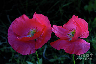 Poppy Wall Art - Photograph - Poppy Pair by Gary Wing