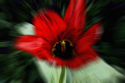 Photograph - Poppy -  Papaver 1 by Suzanne L Kish