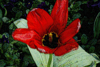 Photograph - Poppy - Papaver 3 by Suzanne L Kish