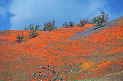 Photograph - Poppy Paradise At The Top Of Tejon Pass by Lynn Bauer