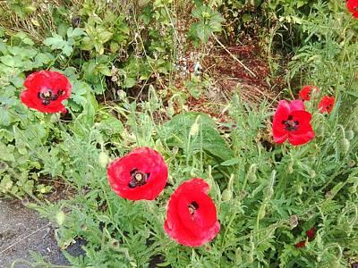 Photograph - Poppy Photo 1173 by Julia Woodman