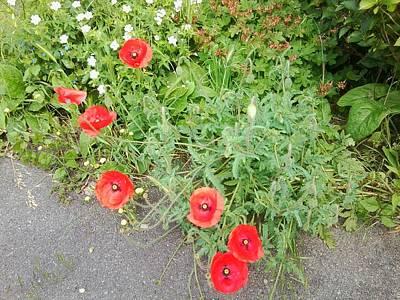 Photograph - Poppy Photo 1174 by Julia Woodman