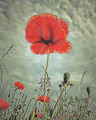 Digital Art - Poppy Postcard by Dorothy Berry-Lound