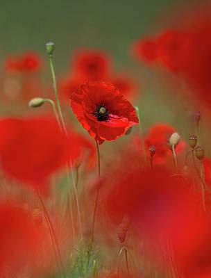 Photograph - Poppy Power by Peter Walkden