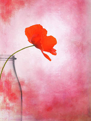 Poppy Red Art Print by Mark Rogan