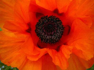 Art Print featuring the painting Poppy by Renate Nadi Wesley