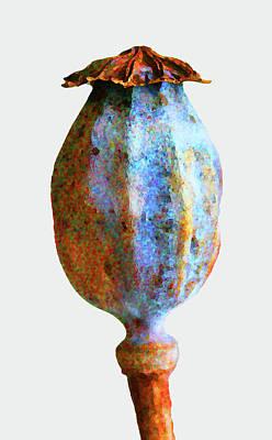 Digital Art - Poppy Seedhead - Orange by Mary Castellan