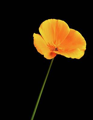 Elpaso Photograph - Poppy by Subhadra Burugula
