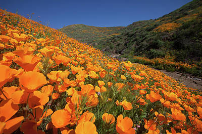 Photograph - Poppy Superbloom by Cliff Wassmann