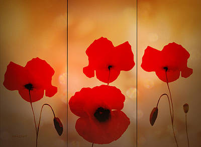 Digital Art - Poppy Triptych by Valerie Anne Kelly