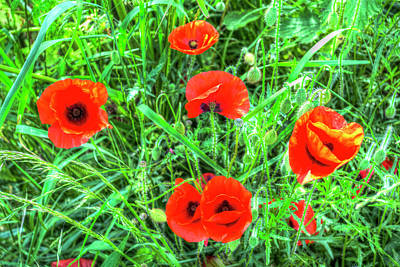 Photograph - Poppy's Of Summer by David Pyatt
