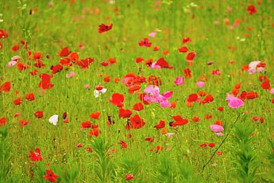 Photograph - Poppy's by Tracy Rice Frame Of Mind