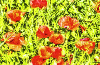 Photograph - Poppy Watercolour Art by David Pyatt