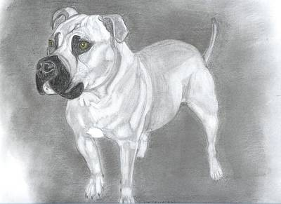 Pitbull Drawing - Pops by Don  Gallacher