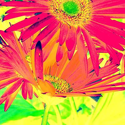Photograph - Popsy Daisy by Marianne Dow