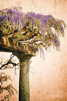 Photograph - Porch With Wisteria by Silvia Ganora