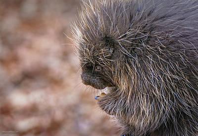 Photograph - Porcupine Blessing by LeeAnn McLaneGoetz McLaneGoetzStudioLLCcom