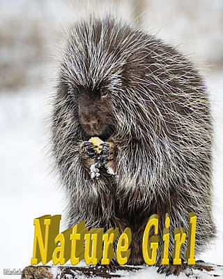 Photograph - Porcupine Nature Girl by LeeAnn McLaneGoetz McLaneGoetzStudioLLCcom