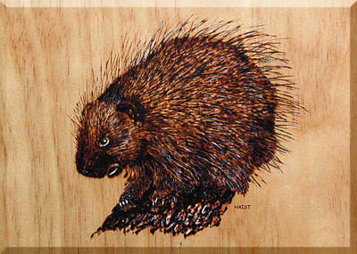 Pyrography - Porcupine by Ron Haist