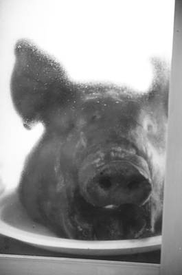 Photograph - Pork Shop by Jerry Cordeiro