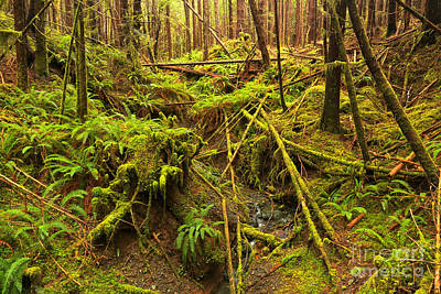 Photograph - Port Alice Rainforest by Adam Jewell