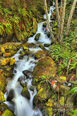 Photograph - Port Alice Rainforest Falls by Adam Jewell