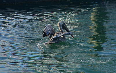 Photograph - Port Canaveral Pelican by Denise Mazzocco