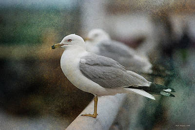 Photograph - Port Gull by WB Johnston