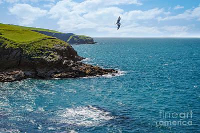 Flying Seagull Photograph - Port Isaac Coastline by Amanda Elwell