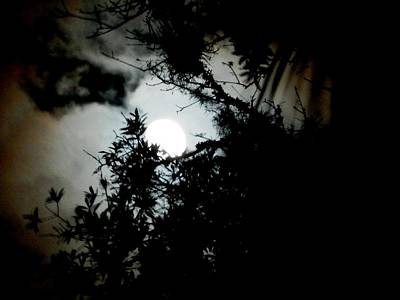 Photograph -  Florida Summer Night Moon by Belinda Lee