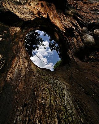 Photograph - Portal by Neil Shapiro