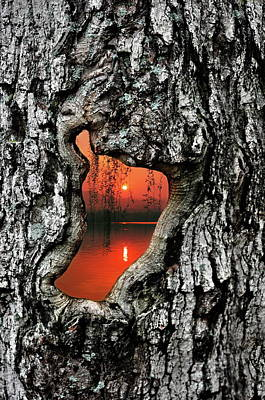Photograph - Portal To Another World by Andrea Kollo