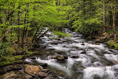 Photograph - Porters Creek by Madonna Martin