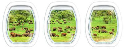 Photograph - Porthole Windows On Elephants by Benny Marty