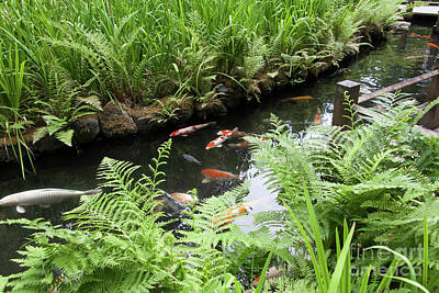 Photograph - Portland Japanese Garden Koi Pond Portland Oregon 5d3834 by Wingsdomain Art and Photography