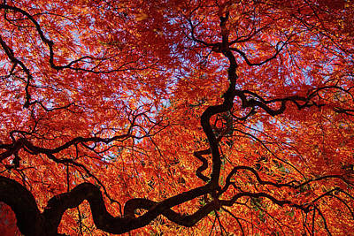 Photograph - Portland Japanese Garden Maple Tree by Kunal Mehra