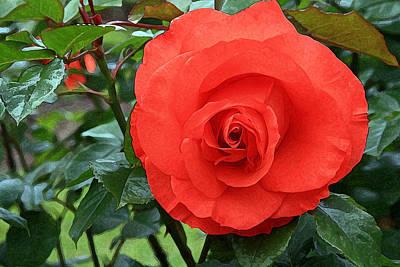 Portland Rose Garden Art Print by Margaret Hood