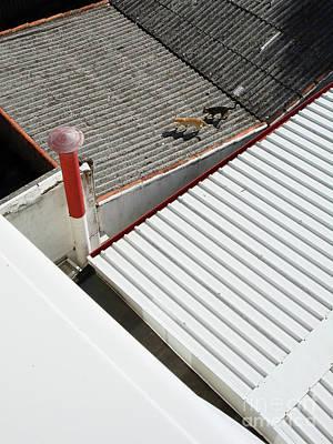 Photograph - Porto Rooftop Companions by Menega Sabidussi