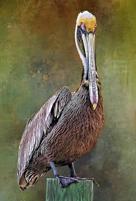 Photograph - Portrait - Brown Pelican by HH Photography of Florida