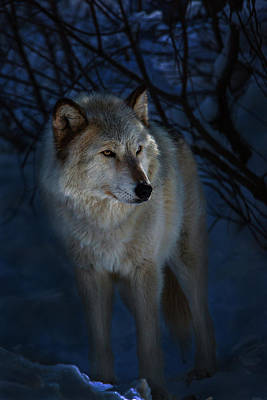 Photograph - Portrait In The Night by Jeff Shumaker