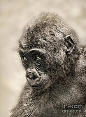 Photograph - Portrait Of A Baby Gorilla Digitally Altered by Jim Fitzpatrick