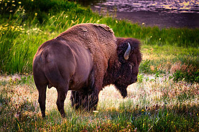 Photograph - Portrait Of A Bison by Renee Sullivan