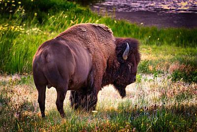 Photograph - Portrait Of A Bison by Renee Sullivan