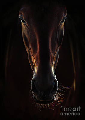 Photograph - Portrait Of A Brown Horse Close Up by Dimitar Hristov
