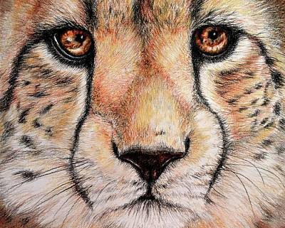 Cheetah Drawing - Portrait Of A Cheetah by Heidi Kriel