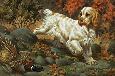 Artist Working Photograph - Portrait Of A Clumber Spaniel Hunting by Walter A. Weber