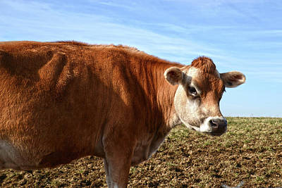 Photograph - Portrait Of A Cow by Ann Bridges